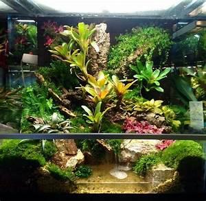Die Besten Aquarien : die besten 25 vivarium ideen auf pinterest aquarium ~ Lizthompson.info Haus und Dekorationen