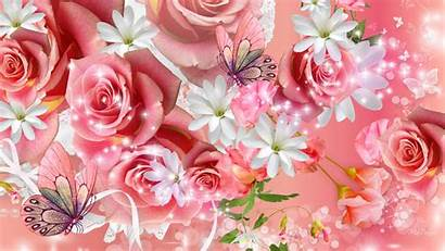 Pink Rose Wallpapers Flowers Roses Amazing