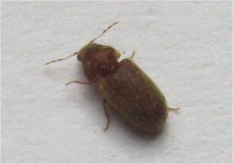 insectes cuisine insecte inconnu dans ma cuisine aleks47