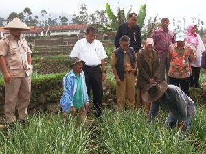 dpr petani bawang putih tidak menikmati melonjaknya harga