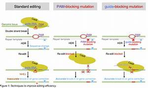 3 Tips To Improve Hdr Efficiency For Crispr Editing In