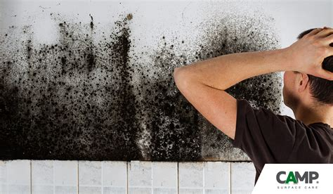 Muffe Sui Muri Interni - trattamento muffa sui muri