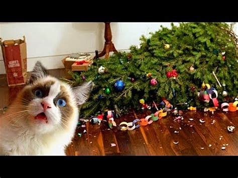 repel cat christmas tree cats trees not always the best combination