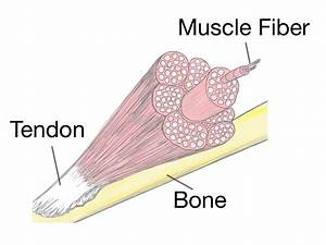 Soft Tissue Therapy - Explained