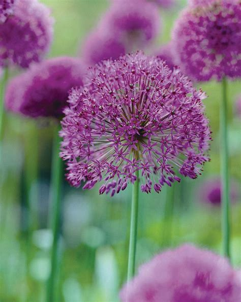 nigel colborn s essential for your garden this week