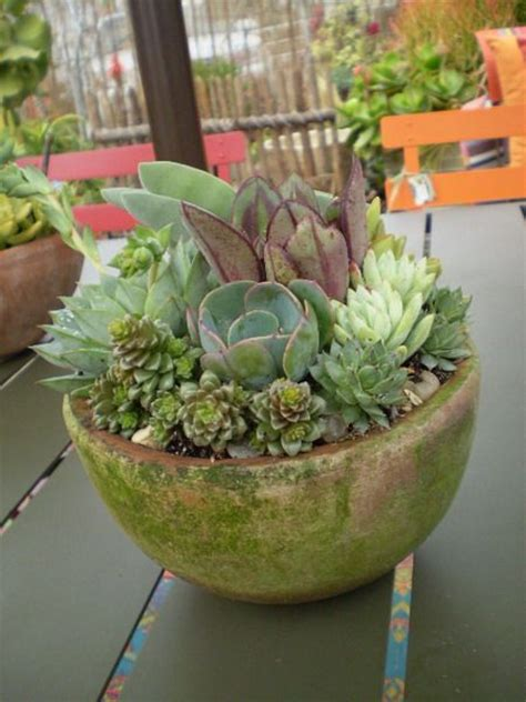 gardens succulent bowls and summer on