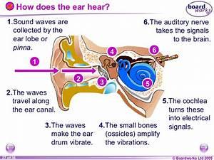 8 L Sound  U0026 Hearing  Boardworks