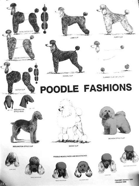 122 best Poodle Cuts, Clips, & Styles. images on Pinterest