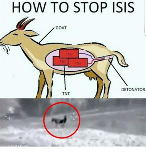 How To Stop Isis Goat Detonator Tnt  Isis Meme On Meme