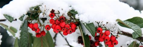 Polyrattan Im Winter Draussen Lassen by Gartenm 246 Bel Im Winter Drau 223 En Stehen Lassen M 246 Bel