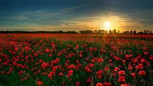 Red Flower Garden Wallpapers