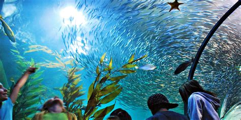 17 aquarium of the bay visit any day of 2017 reg 25 travelzoo