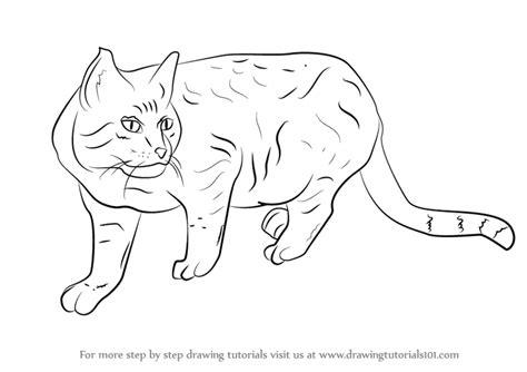 step  step   draw  wildcat drawingtutorialscom