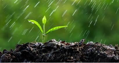 Rain Earth Scent