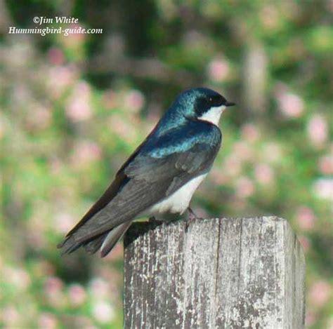 live bird cam streaming streaming hummingbirds and nest