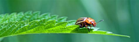 Organic Pest Control Series Common Garden Pests Organic