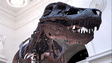 Dinosaurs May Have Continued Dominating Earth If an ...