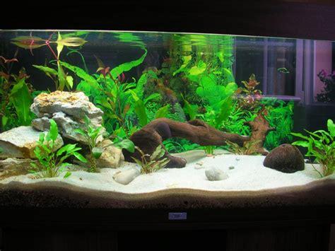 demarrage d un 180 d 233 butant forum aquarium