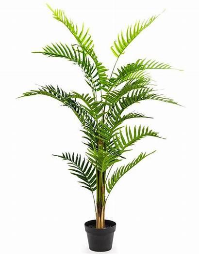Ornamental Fern Tree Pot Brand Interiors