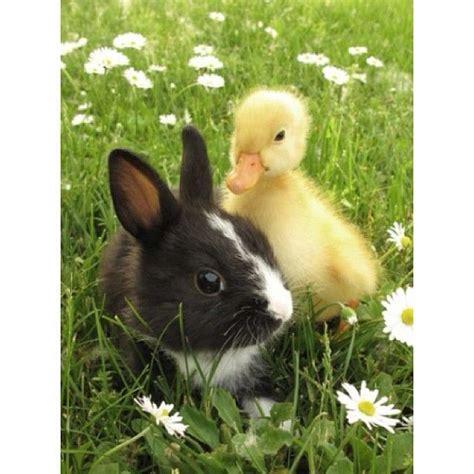 Best 25+ Unlikely animal friends ideas on Pinterest