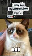 Angry Cat Memes No The...