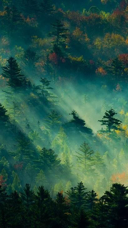 4k Nature Trees Wallpapers Vertical 2k Wallpapershome
