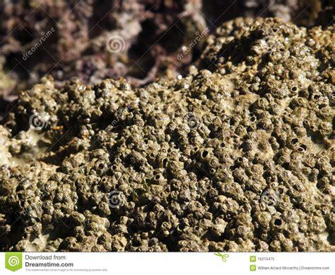 coral polyps poliepen koraal het