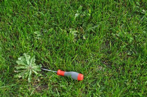 Pilze Im Garten Vernichten by Unkraut Im Rasen Vernichten Bester Unkrautvernichter F 252 R