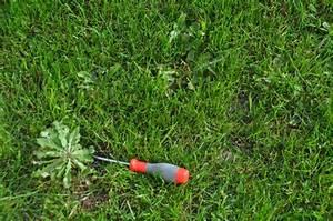 Unkrautbekämpfung Im Rasen : schlingpflanze unkraut pflanzen f r nassen boden ~ Eleganceandgraceweddings.com Haus und Dekorationen