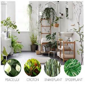 turn your bathroom into an oasis with these indoor