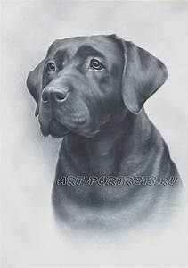 Black Lab Dog Drawings