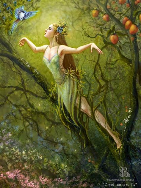 dryad learns  fly  brooke gillette featured artist