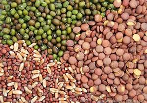 The Basics Of Vegetable Seeds You Must Know - Gardening ...