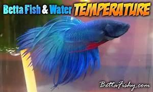 Optimale Aquarium Temperatur : 17 best images about betta fish pics on pinterest aquarium driftwood betta fish tank and live ~ Yasmunasinghe.com Haus und Dekorationen