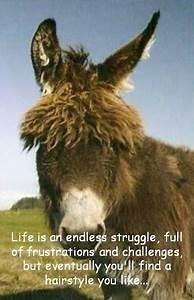 Funny Donkey Quotes Hindi
