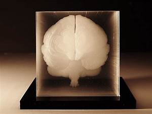 Human brain acrylic sculpture by Northup - Design Is This