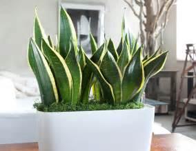 10 best indoor plants for gear patrol
