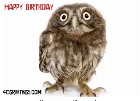 happy birthday owl   happy birthday ecards