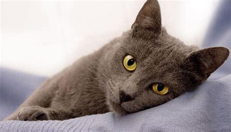 Katzen Halten Ausstattung by Gefahren F 252 R Katzen Im Haushalt Zooroyal Magazin