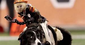 Minute Of Meeting Monkey Rides Dog At Bengals Game Scoreboredsports