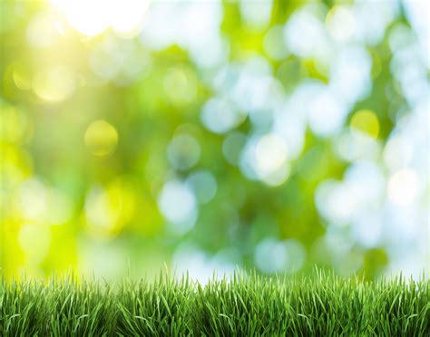 lawn care service prices  fairfax county