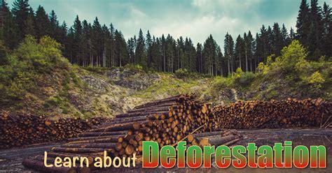 deforestation  kids information  facts