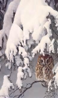 Screech Owl Winter