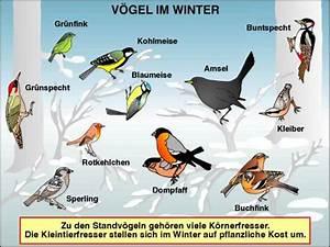 Vögel Im Winter Kindergarten : transparentsatz standv gel t3063av ~ Whattoseeinmadrid.com Haus und Dekorationen