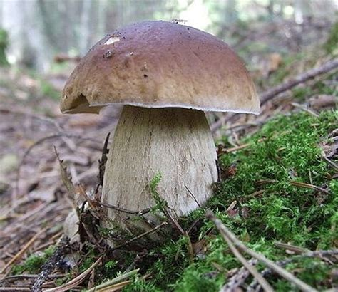 Pilze Im Garten Selber Züchten by Pilze Selber Z 252 Chten