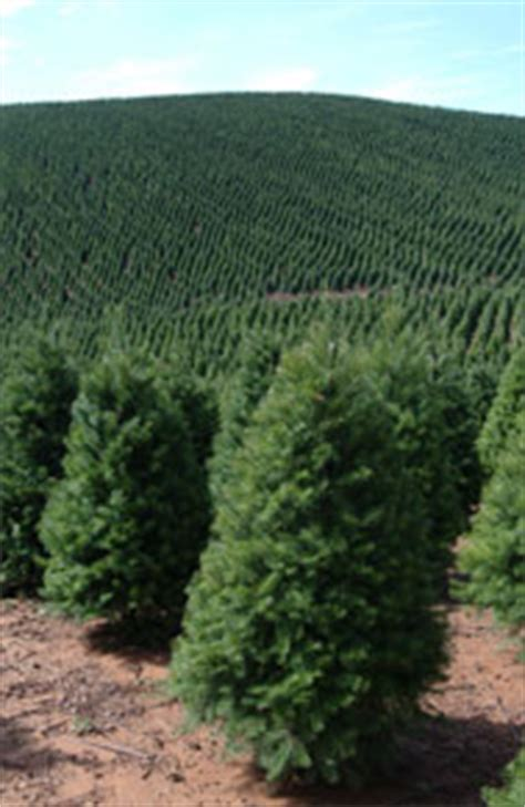noble mountain tree farm