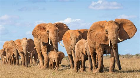 Animal Elephant Family 4K Wallpaper HD Wallpapers