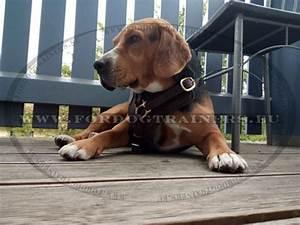 Harnais Gros Chien : harnais en cuir pour chien harnais pour gros chien h10 1057 pettorina per lavoro in vero ~ Nature-et-papiers.com Idées de Décoration