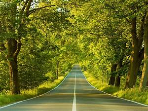 Nature, Trees, Road, Wallpapers, Hd, Desktop, And, Mobile, Backgrounds