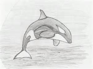 Killer Whale Drawings